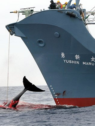 Japanese Whale Killers 2 days from leaving port to slaughter more Whales for apparant RESEARCH ??