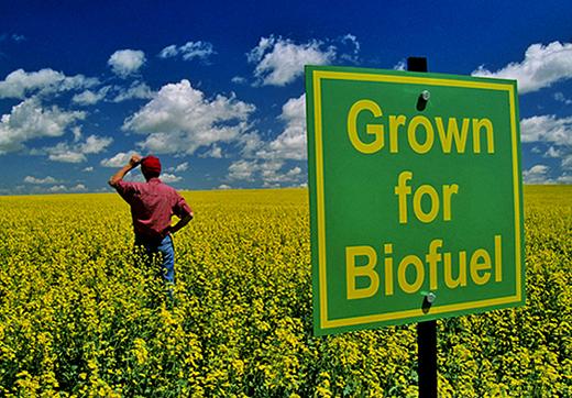 biofuel-field