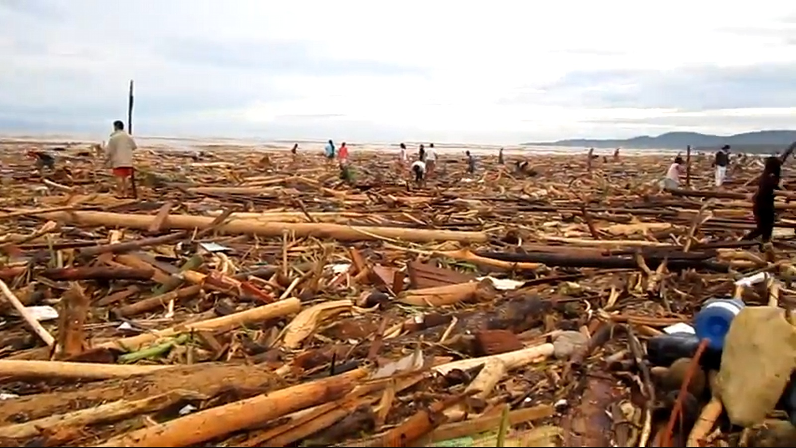 research paper forest destruction Deforestation in land below  between the 1970s and 1980s, sabah  experienced a rapid loss of forest  the objective of this research paper is to  synthesise.