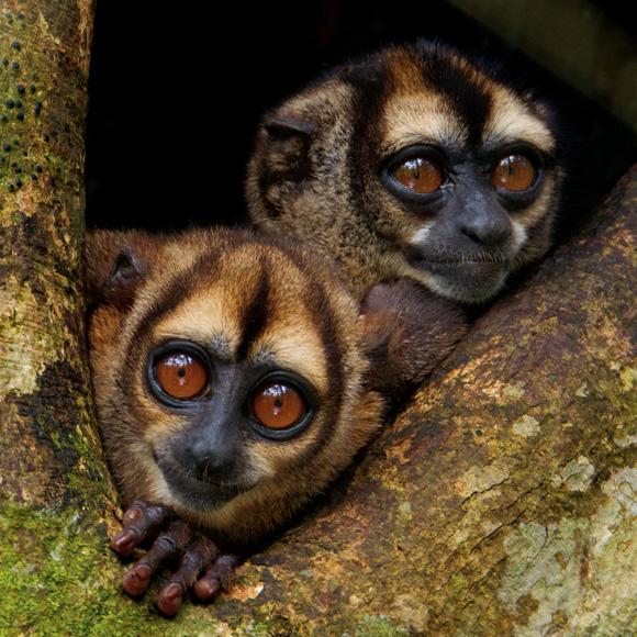 09-noisy-night-monkey-580