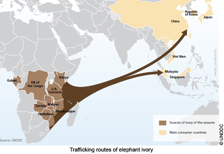 ivory_trafficking