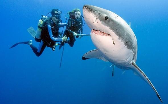 shark-divers_2388636k