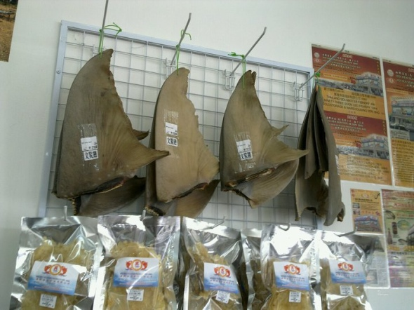 Shark-fins-for-sale-at-a-market.-Photo-credit2