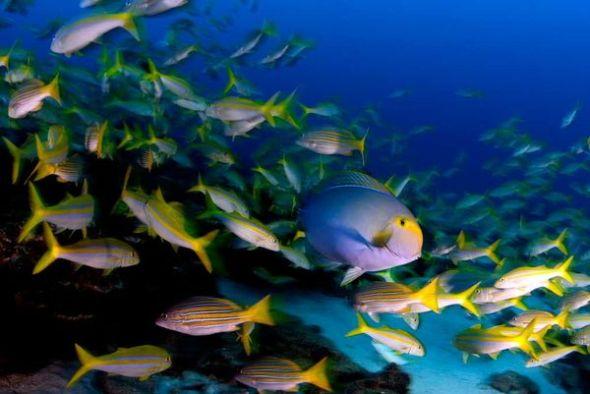 surgeonfishsnappersgoatfish_18077_600x450