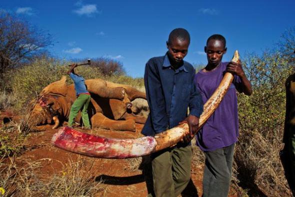 blood-ivory