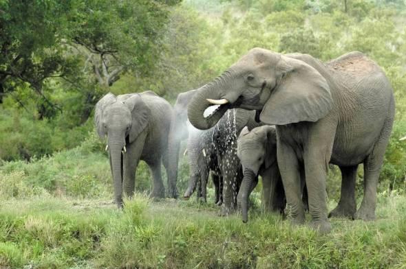 elephants_6d8c652001
