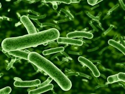 intestinal-bacteria