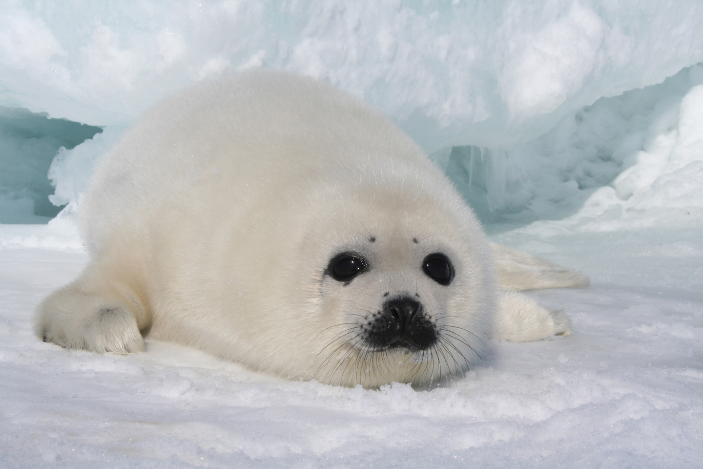 Image result for seals and their pups