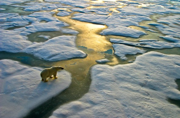 polar-bear-ice-floe-130401