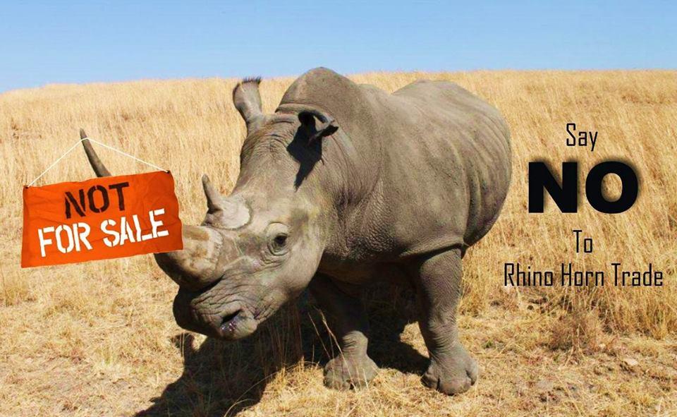 rhinoceros 5 crack