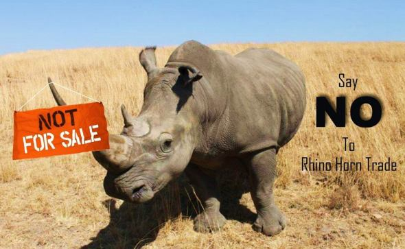 say-no-to-rhino-horn-trade-IARF-Africa