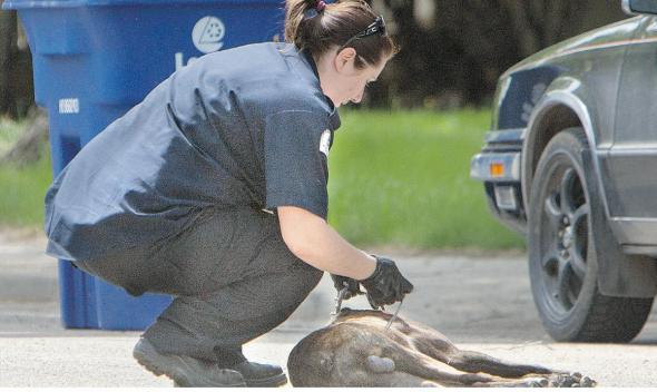 police shoot dog mall