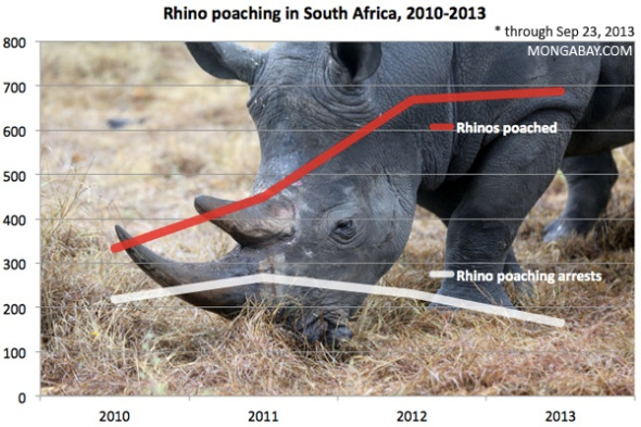 0929-RHINO-POACHING-CHART-SOUTH-AFRICA