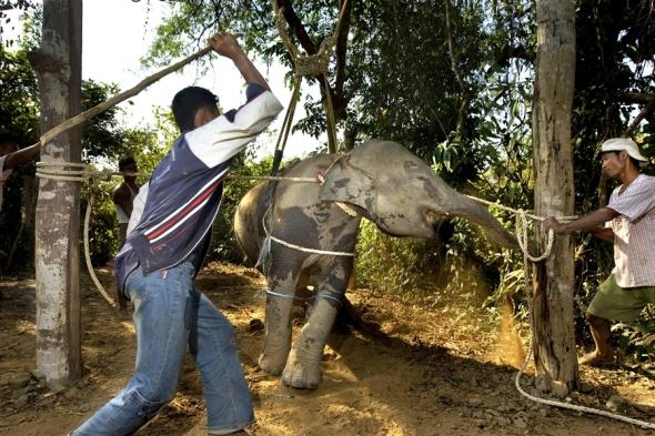 elephant (1)