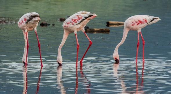 3632_flamingo_03
