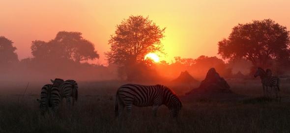 african sunrise (1)