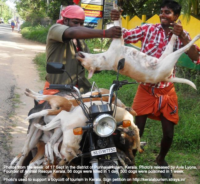 Trained Dogs For Sale In India