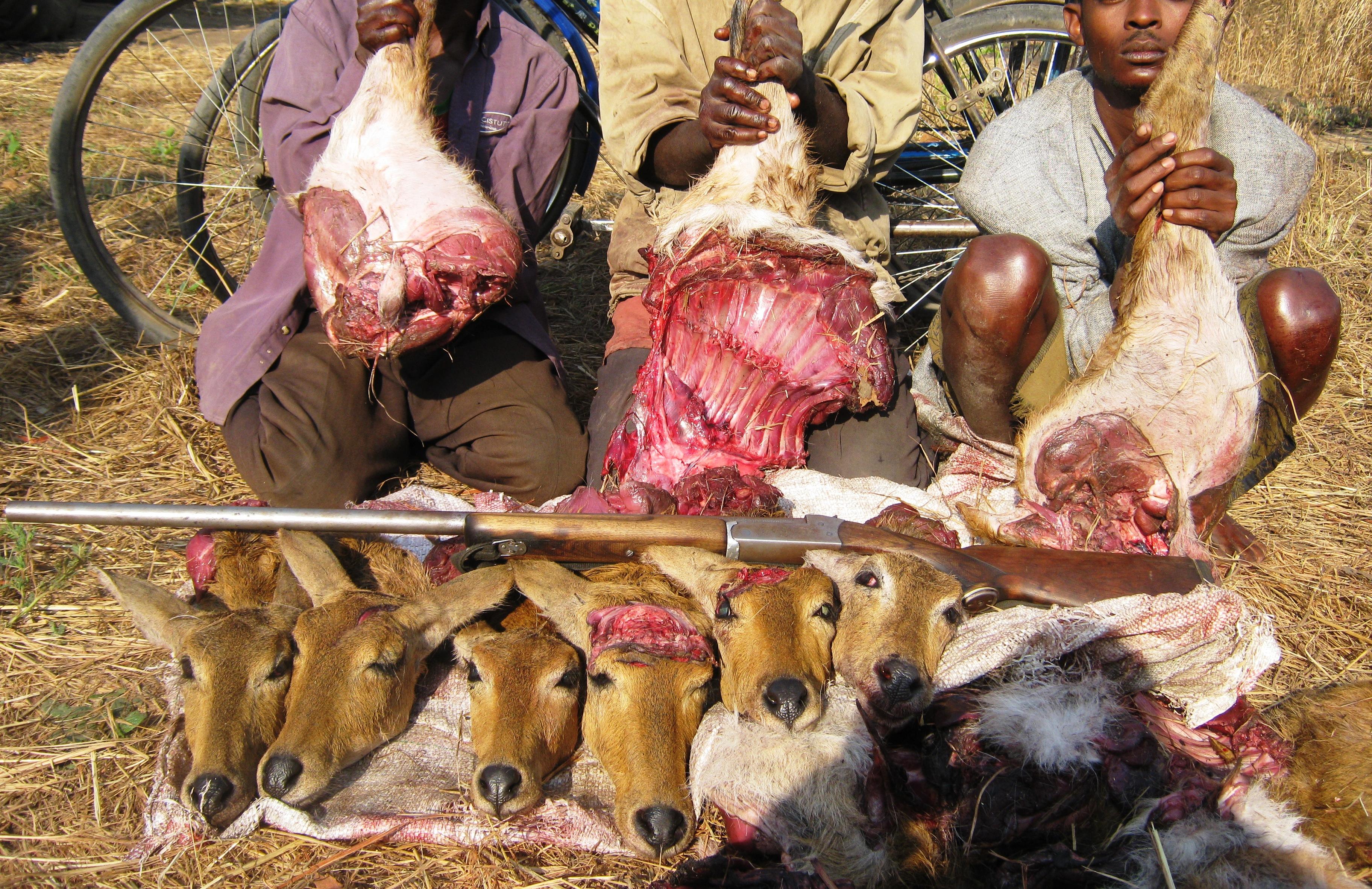 april 2014 speak up for the voiceless international animal