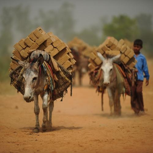 726donkey_work_india