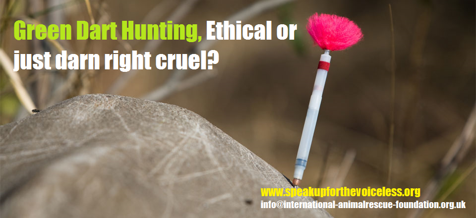 the ethics of hunting for sport Not work to examine hunting as a sport instead focusing on how the practice of  hunting is guided by a particular ethical perspective developed through the lived.