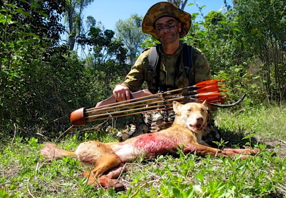 DINGO KILLED BY A HUNTER USING A CROSSBOW
