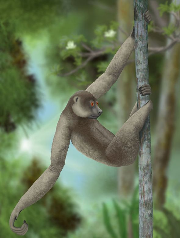 640px-Palaeopropithecus_ingens