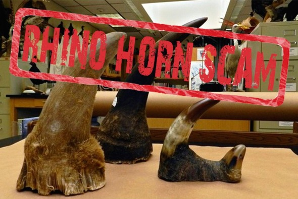 Stamp Rhino Horn Scam