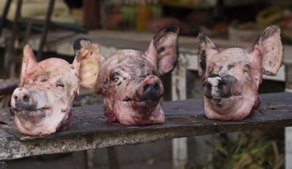 Pig heads at Yuanyang meat market of Yunnan, Vietnam.