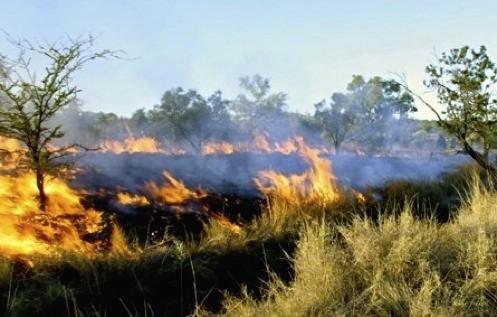 Fires across the wetlands, where Quokkas live.