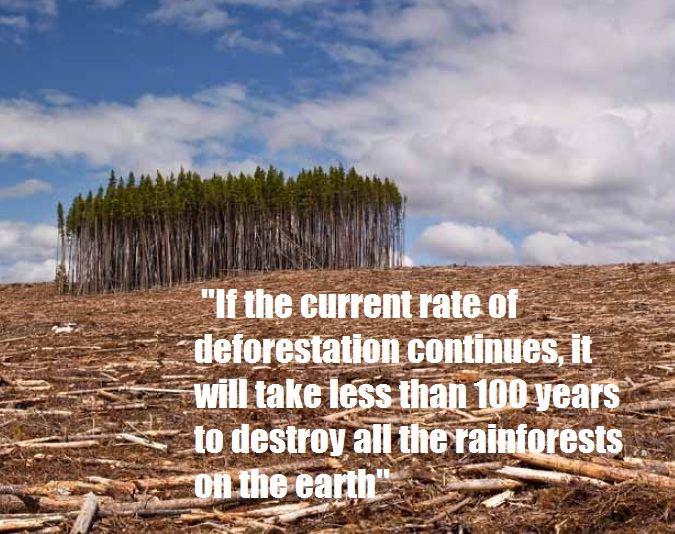 overpopulation deforestation essay