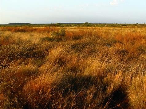 Grasslands where Quokkas live.