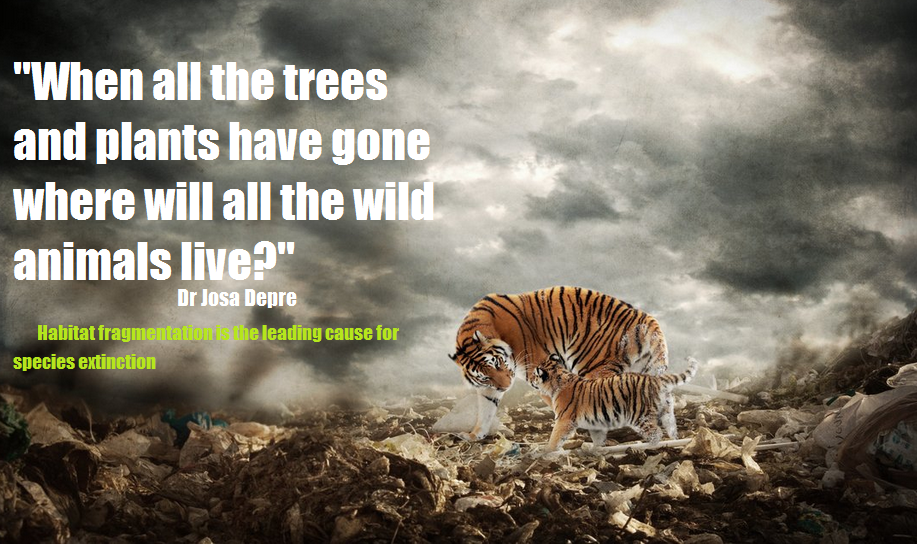 top five causes of species extinction speak up for the voiceless  whenif11