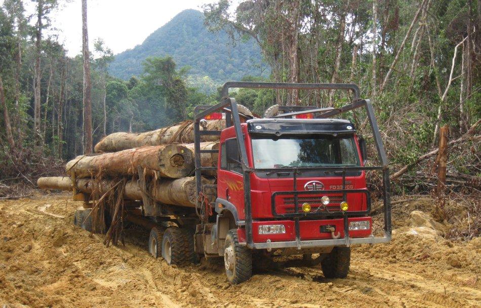 faw logging kayu