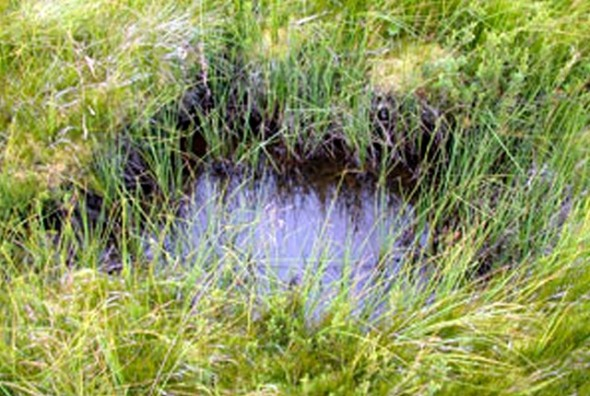 Example of breeding area for Corroboree Frogs: grasses by and shallow pool.