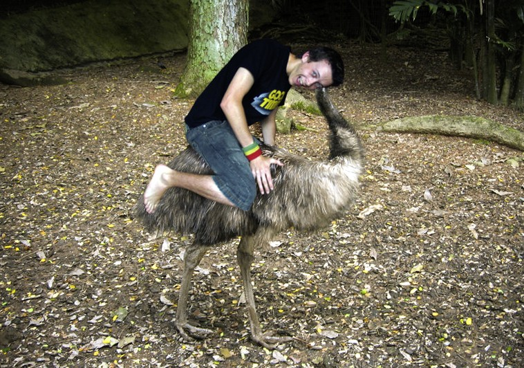 the emu a gentle bird cruelly farmed for body parts   rescuer s heart