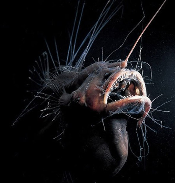 weird-angler-fish