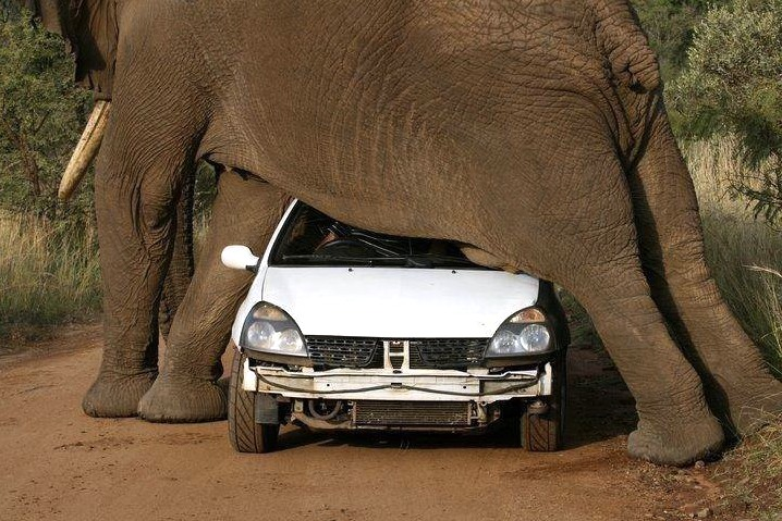 Several photos were taken of this itchy elephant, scratching himself against the car. Next time the tourist will allow an elephant to have the right of way.