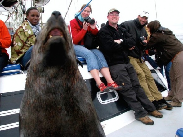 A wild seal climbs onto a tourist boat and socialises with the people.