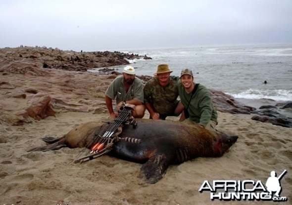Bow hunters killing fur seals in Namibia, with AfricaHunting.com.