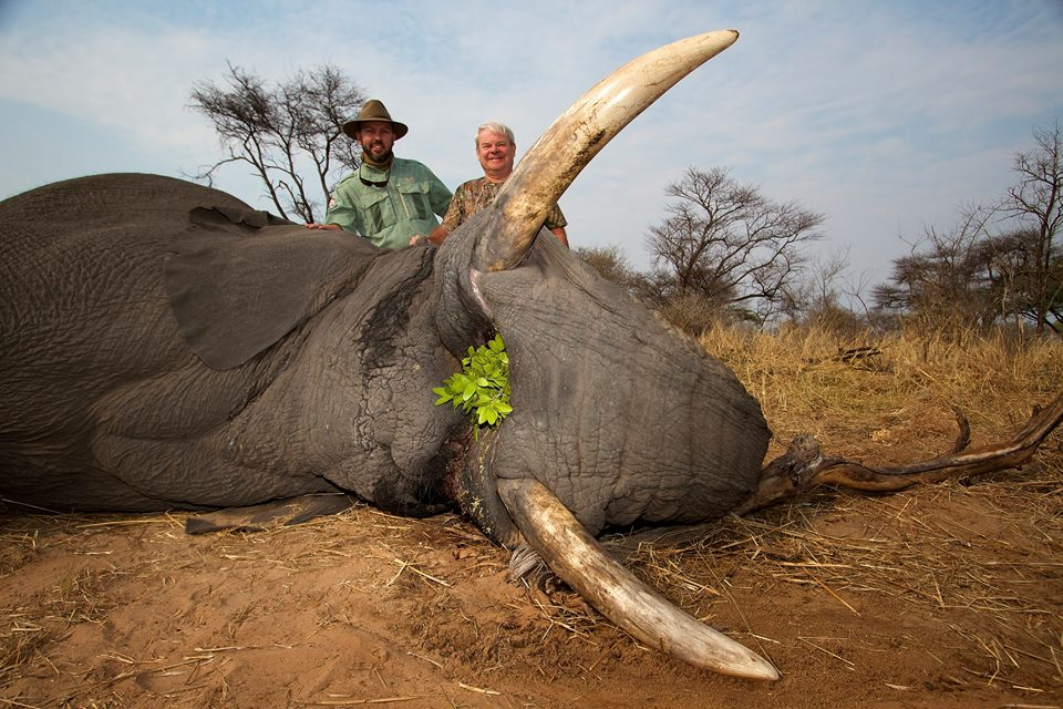 As The Elephant Took A Mouthful Of Food Hunter Pulled Trigger Exploding Bullet Into Back Elephants Head Leaving This Magnificent Beast