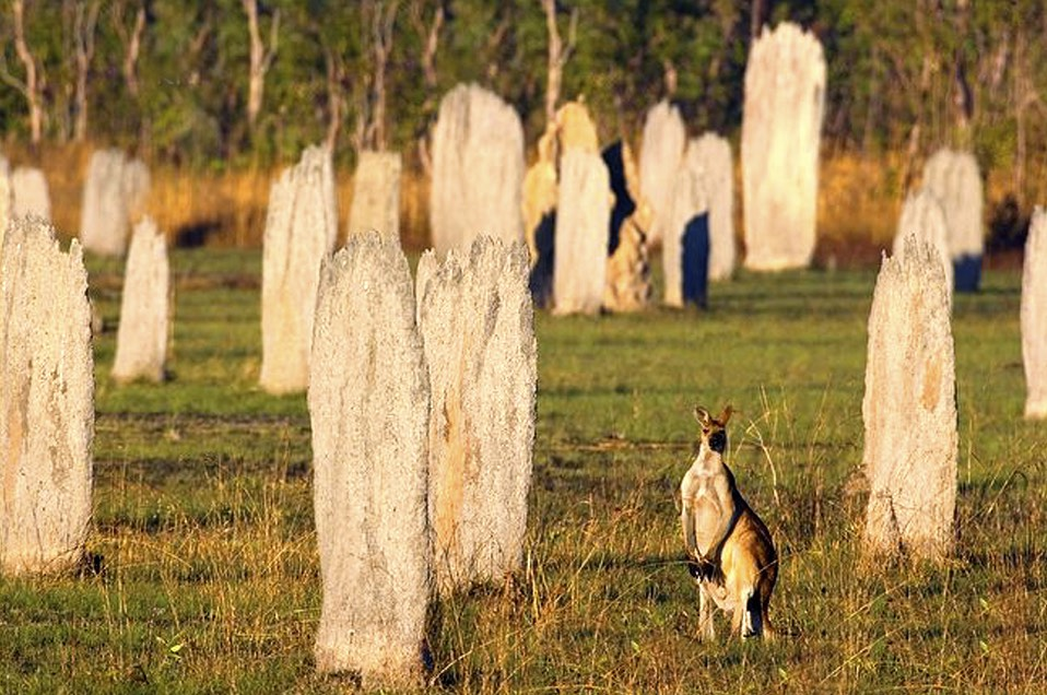Magnetic termite mounds in Northern Australia.