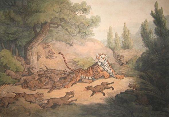 Tigerdholes
