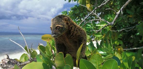 bearcus
