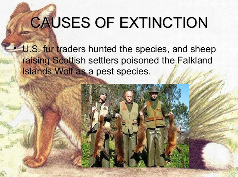 dinosaur extinction essay What caused the extinction of the dinosaurs if the dinosaurs cohabitated with humanity, what happened to them.