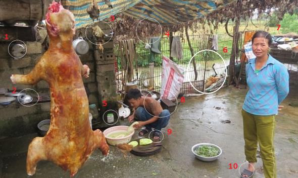 foodpato