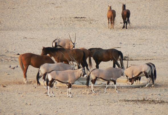 namibia-2011-164
