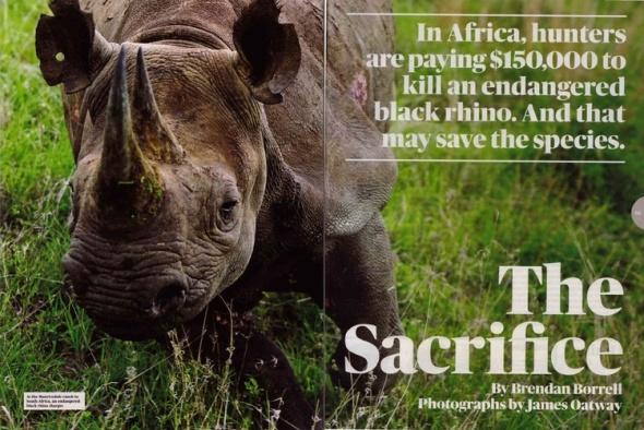 rhino_cover